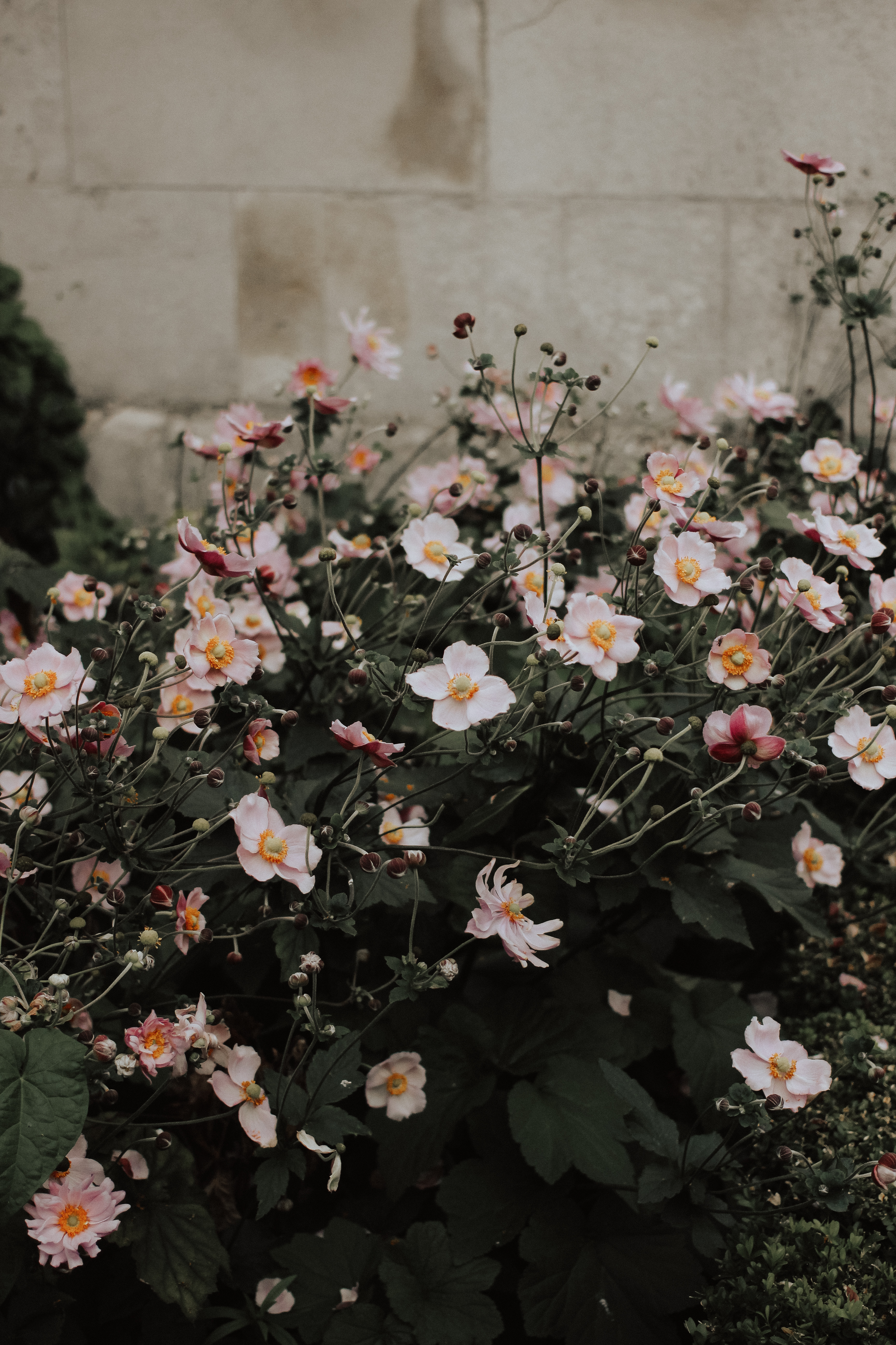 The Social Project, How To Make Friends, Social, Social Blogger, Social Media, Girl Boss, Entrepreneur, Creative, Collaboration, Barrie Wedding Planner, Barrie Social Media, Make Friends Club, London England, Travel, Travel Photography, St Pauls Cathedral, Flowers