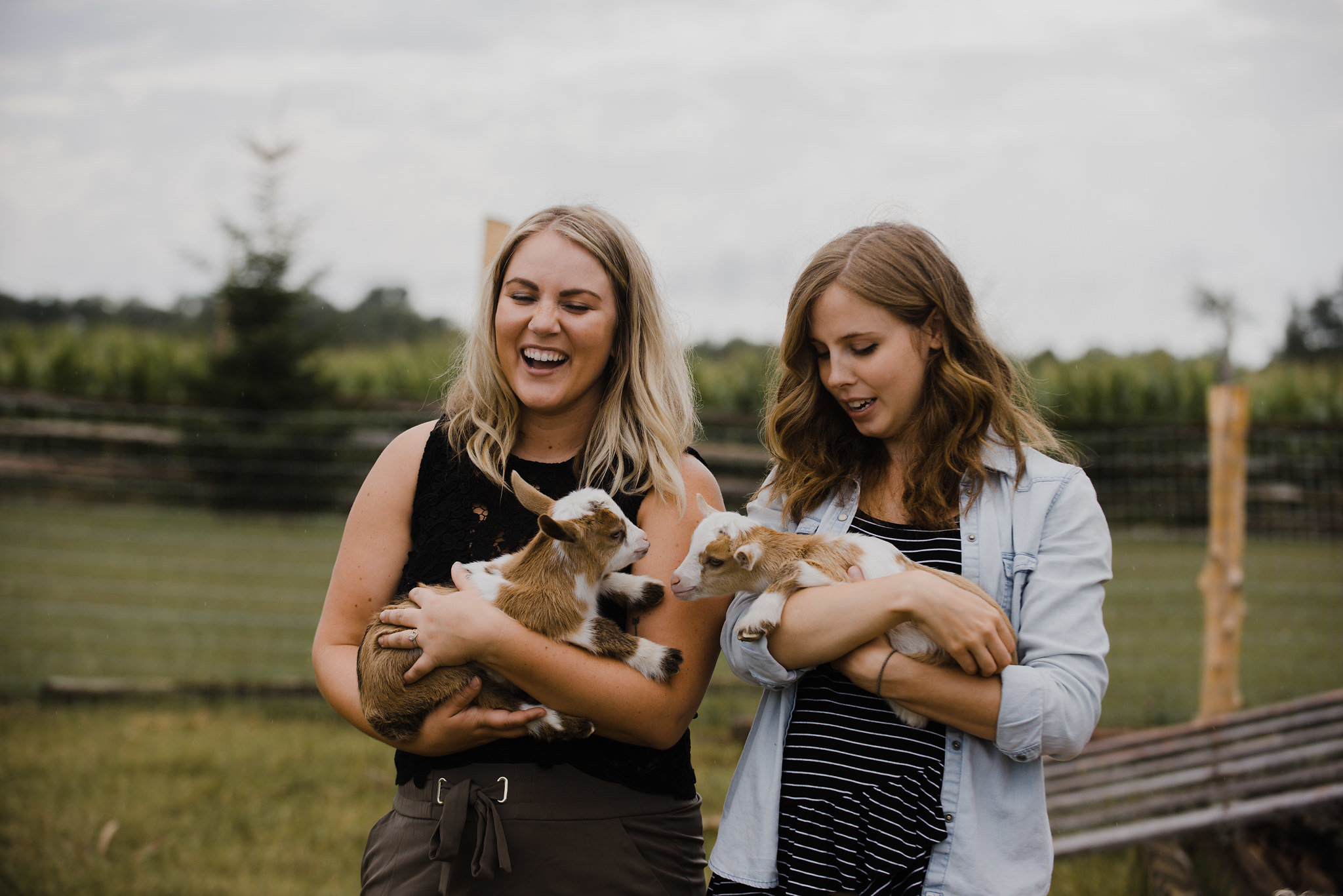 The Social Project, Barrie Social Project, Barrie Social, Branding, Social Media, Creative, Creative Collaboration, Girl Boss, Barrie Boss Babes, Entrepreneurs, Graphic Design, Mood Board, Branding Process, goats, baby goats